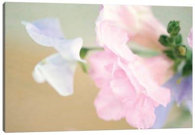 Pastel Blossoms Canvas Art Print