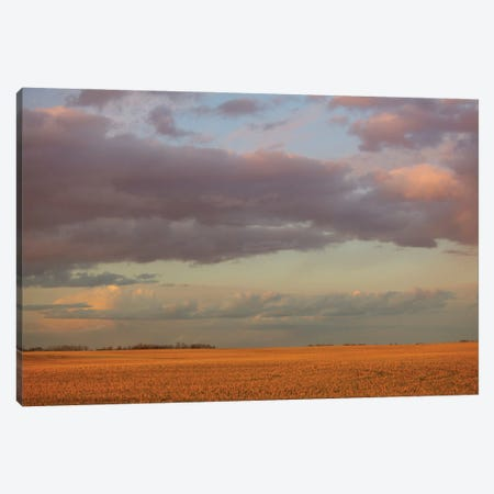 Pretty Wheatfield Canvas Print #RMU139} by Roberta Murray Art Print