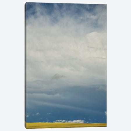 Canola Storm Canvas Print #RMU140} by Roberta Murray Canvas Wall Art