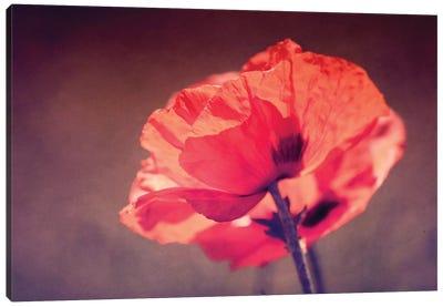 In Rememberance Canvas Art Print