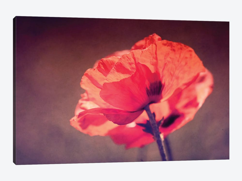 In Rememberance by Roberta Murray 1-piece Canvas Art Print