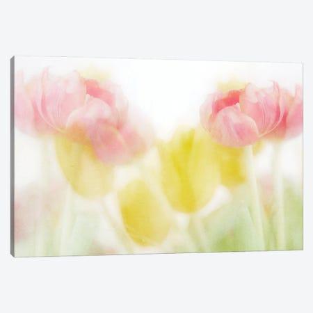 May Canvas Print #RMU145} by Roberta Murray Canvas Art Print