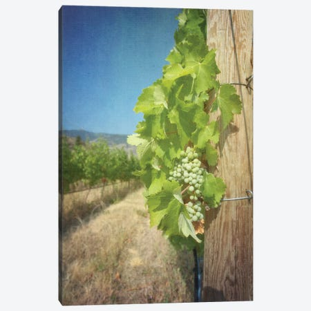 Viticulture Canvas Print #RMU147} by Roberta Murray Art Print