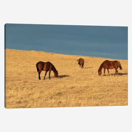 Grass Eaters Ridge Canvas Print #RMU151} by Roberta Murray Canvas Art Print