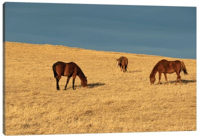 Grass Eaters Ridge Canvas Art Print