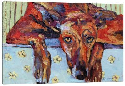 Lauren The Greyhound Canvas Art Print