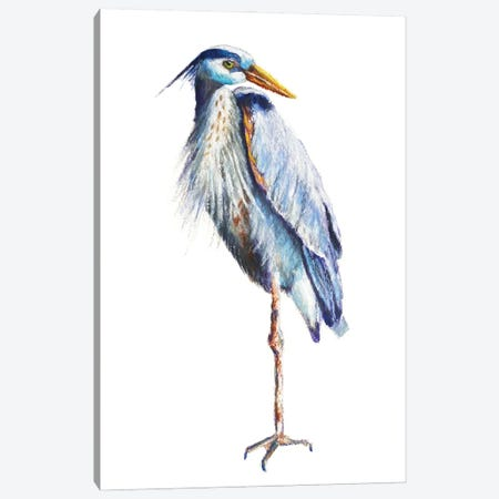 Great Blue Heron Canvas Print #RMU199} by Roberta Murray Canvas Art Print
