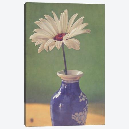 Daisy In Vase Canvas Print #RMU204} by Roberta Murray Canvas Wall Art