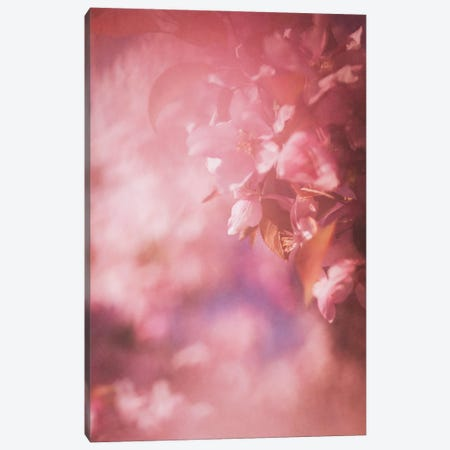 Pink Apple Blossoms Canvas Print #RMU228} by Roberta Murray Canvas Art Print