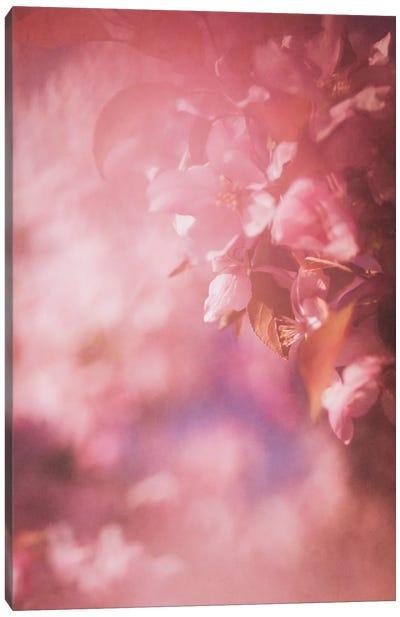 Pink Apple Blossoms Canvas Art Print