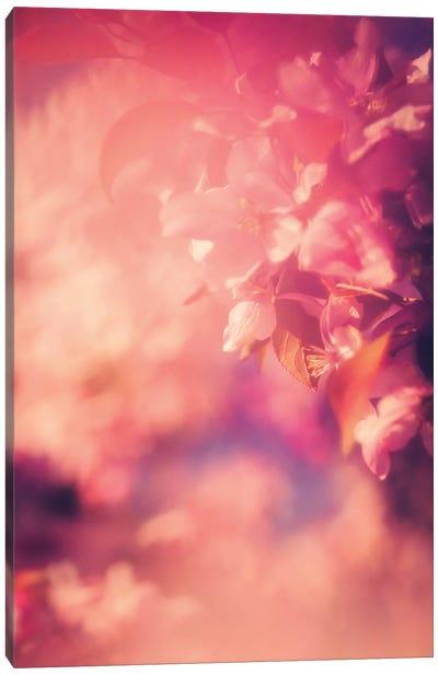 Rose Coloured Blossoms Canvas Art Print