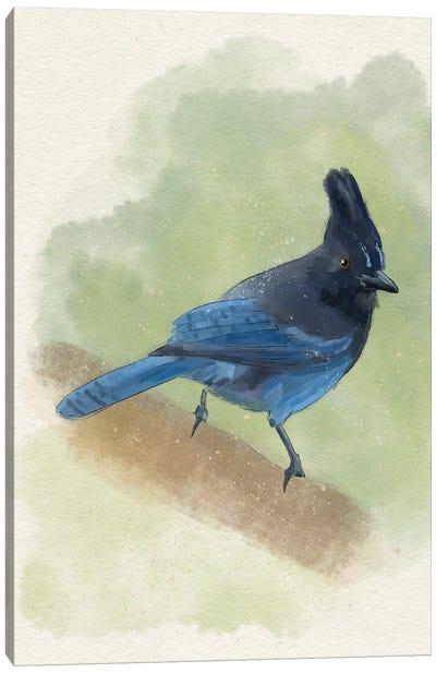 Stellar's Jay Canvas Art Print