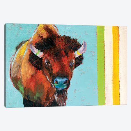 Canadian Shaggy Cow Canvas Print #RMU40} by Roberta Murray Art Print