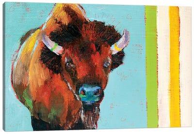 Canadian Shaggy Cow Canvas Art Print
