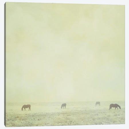 Colder Horses Canvas Print #RMU47} by Roberta Murray Canvas Art