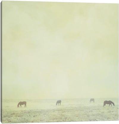 Colder Horses Canvas Art Print