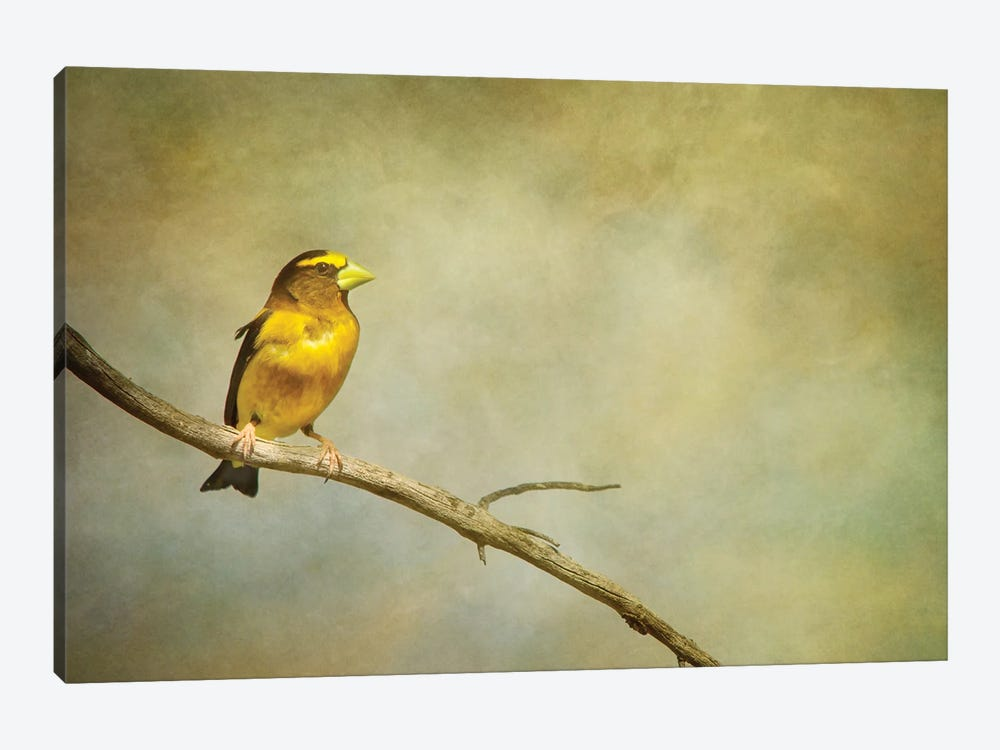 Man Of The Hour by Roberta Murray 1-piece Canvas Wall Art