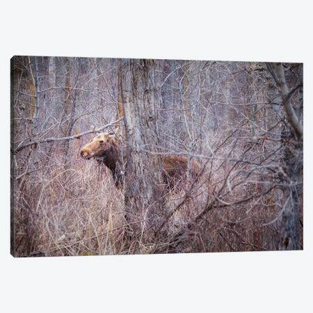 Secrets Of The Forest Canvas Print #RMU62} by Roberta Murray Canvas Print