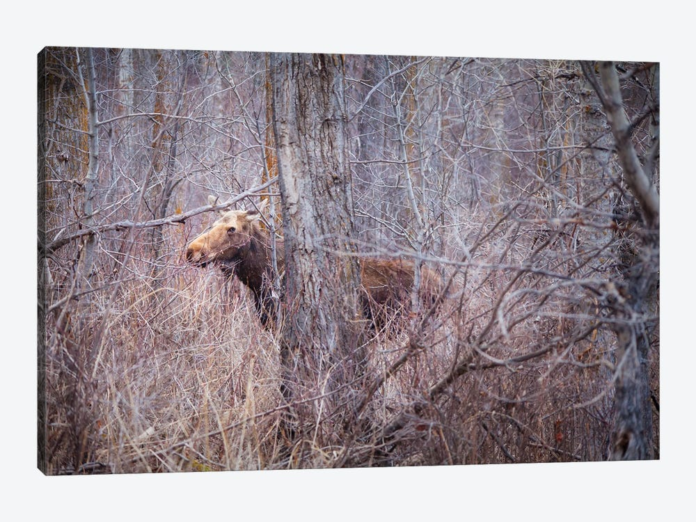 Secrets Of The Forest by Roberta Murray 1-piece Canvas Print