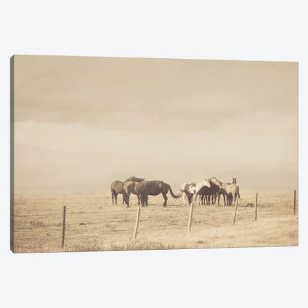 The Herd Canvas Print #RMU74} by Roberta Murray Art Print