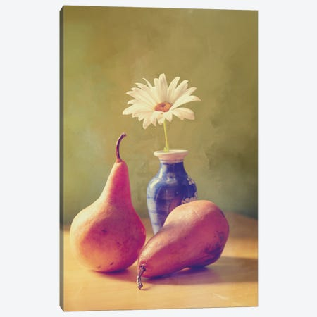 Daisy And Pears Canvas Print #RMU99} by Roberta Murray Canvas Wall Art