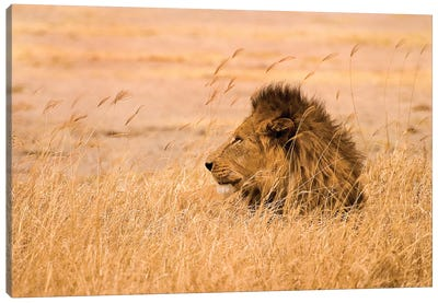 King of the Pride Canvas Art Print