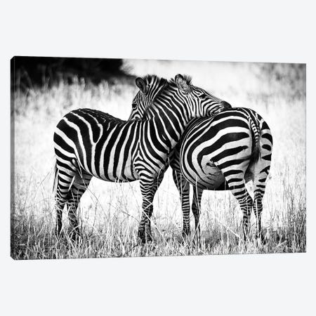Zebra Love Canvas Print #RMZ4} by Adam Romanowicz Canvas Wall Art