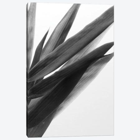 B&W Bamboo I Canvas Print #RNE137} by Renée Stramel Art Print