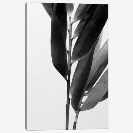 B&W Bamboo II Canvas Print #RNE138} by Renée Stramel Canvas Wall Art