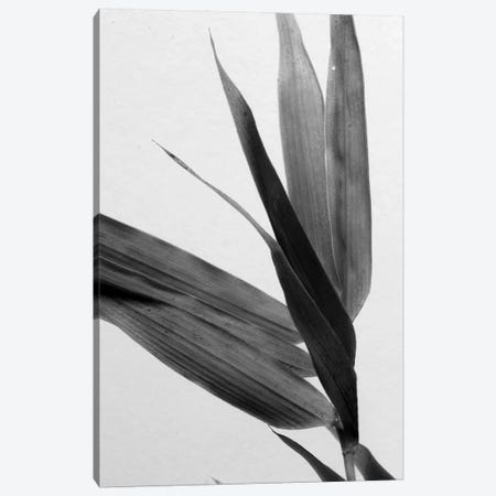 B&W Bamboo III Canvas Print #RNE139} by Renée Stramel Canvas Artwork