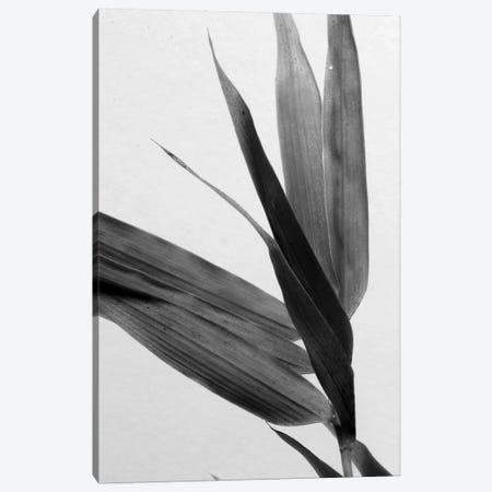 B&W Bamboo III Canvas Print #RNE139} by Renée Stramel Canvas Artwork