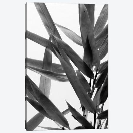 B&W Bamboo IV Canvas Print #RNE140} by Renée Stramel Canvas Print