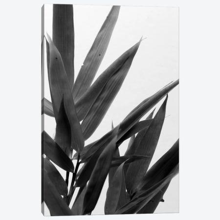 B&W Bamboo V Canvas Print #RNE141} by Renée Stramel Art Print