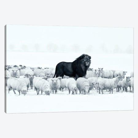 Lion Among Sheep Canvas Print #RNG20} by Ruvim Noga Canvas Print