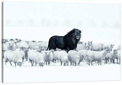 Lion Among Sheep Canvas Art Print