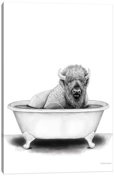 Bison in Tub Canvas Art Print