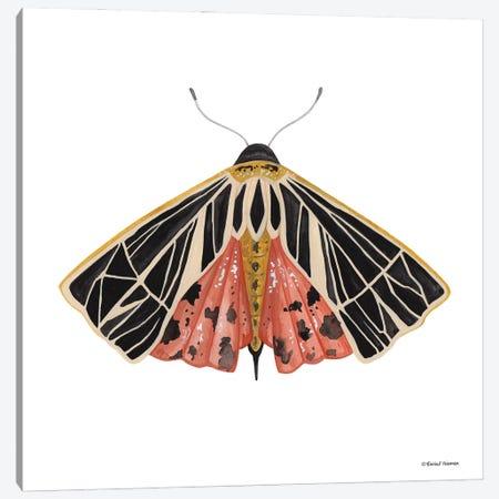 Naturally Wonderful Moth Canvas Print #RNI72} by Rachel Nieman Canvas Wall Art