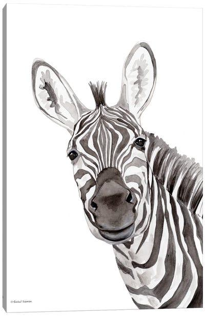 Safari Zebra Peek-A-Boo Canvas Art Print