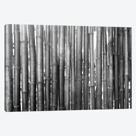 Bamboo Lineup (Black And White) 3-Piece Canvas #RNN1} by Ben Renschen Art Print