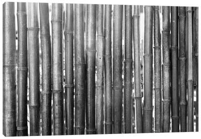 Bamboo Lineup (Black And White) Canvas Art Print