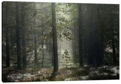 The Patience Of A Young Tree Growing In The Forest Canvas Art Print