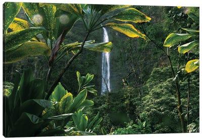 Lush Hawaiian Jungle Waterfall Canvas Art Print