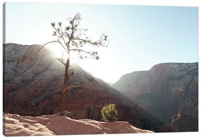 Desert Canyon Tree I Canvas Art Print
