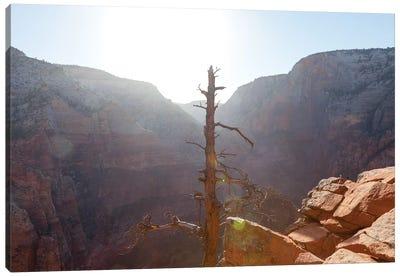 Desert Canyon Tree II Canvas Art Print