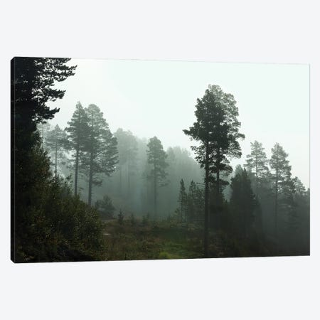 Foggy Forest Morning In Norway Canvas Print #RNN34} by Ben Renschen Canvas Wall Art
