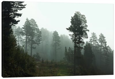 Foggy Forest Morning In Norway Canvas Art Print