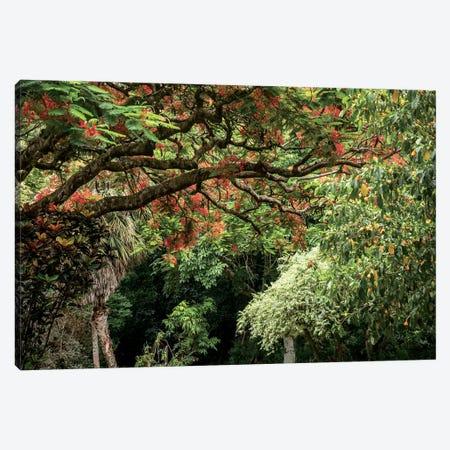 Hawaiian Flowering Trees Canvas Print #RNN37} by Ben Renschen Canvas Wall Art