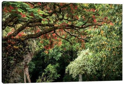 Hawaiian Flowering Trees Canvas Art Print