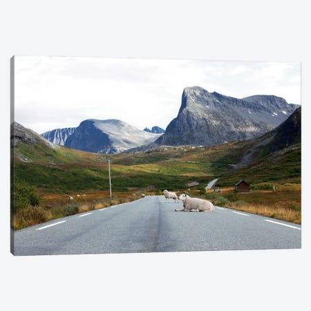 Sheep Relaxing On Mountain Road Canvas Print #RNN51} by Ben Renschen Art Print