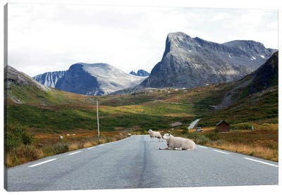 Sheep Relaxing On Mountain Road Canvas Art Print